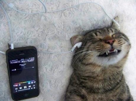 A cat that's a classical music fan